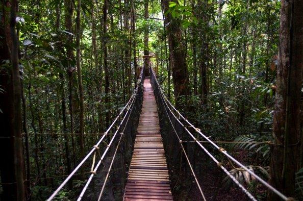 Peru, Amazon Basin
