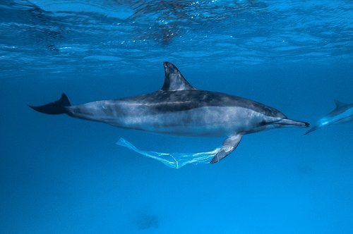 A spinner dolphin
