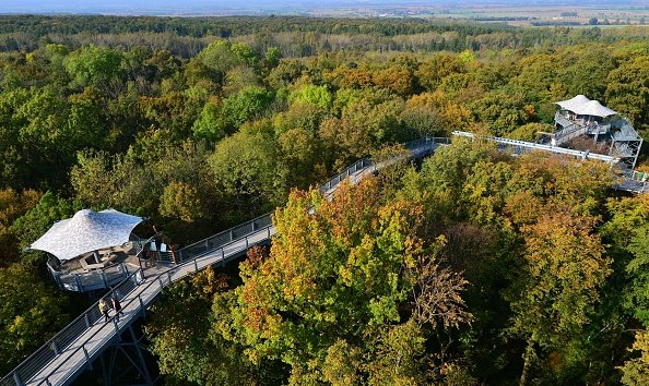 Germany's Hainich National Park