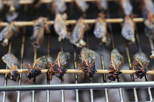 Grilled Cicadas