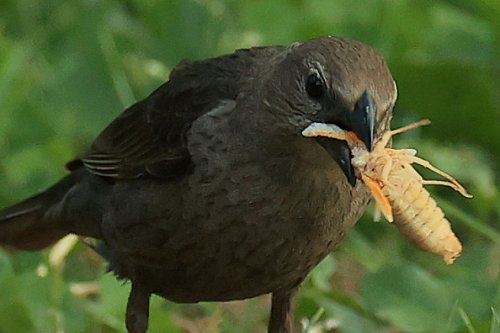 Fowl Grub