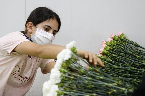 Nelle serra in Turchia si preparano i fiori per la festa della mamma