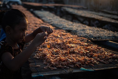 Shrimp drying in fisherman village, Jakarta