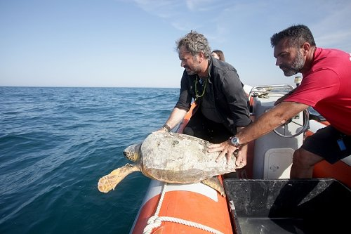 Saving a turtle on World Oceans Day