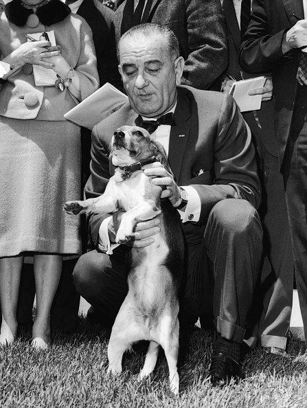 President Lyndon Baines Johnson kneels with his pet beagle 'Him'