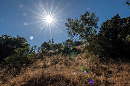 Sun-scorched grass