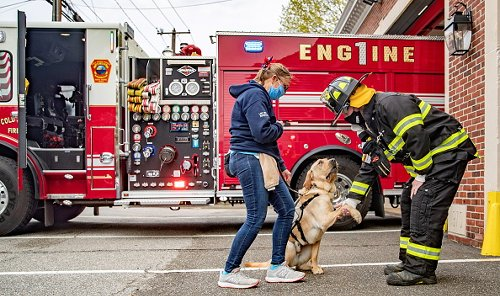 Trainer Introduces Service Dog to Firefighter