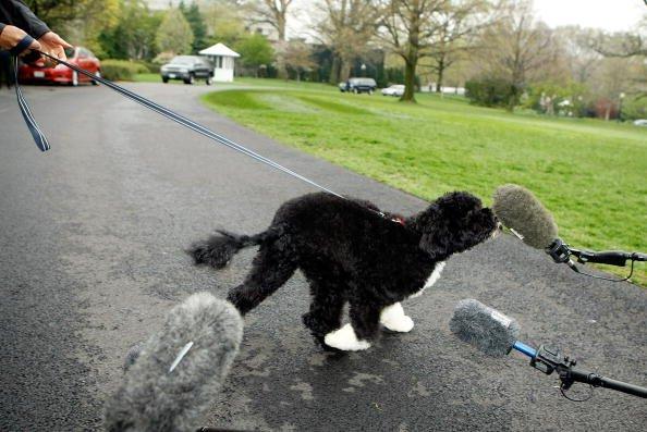 U.S. President Barack Obama's new dog meets the press