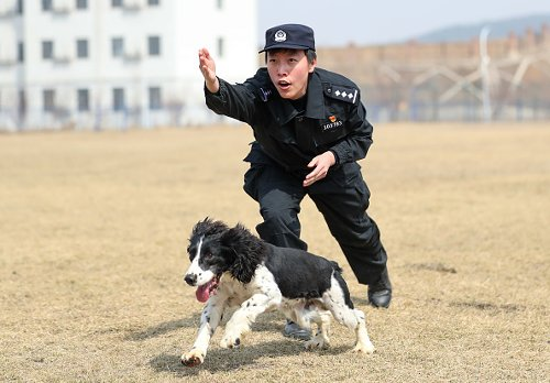 Police Dog Trained to Search for Explosives