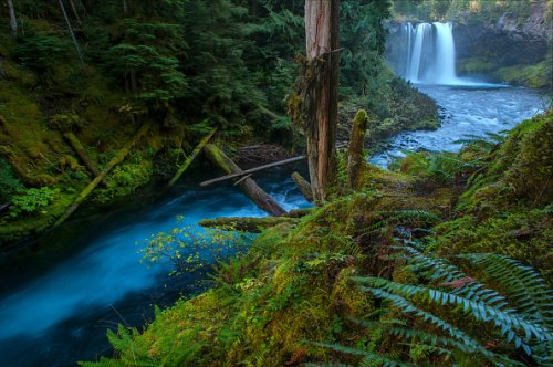 Falls on the McKenzie River, Willamette National Forest
