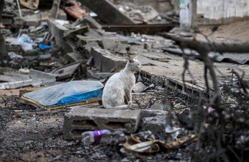 Un gatto tra le macerie a Città di Gaza