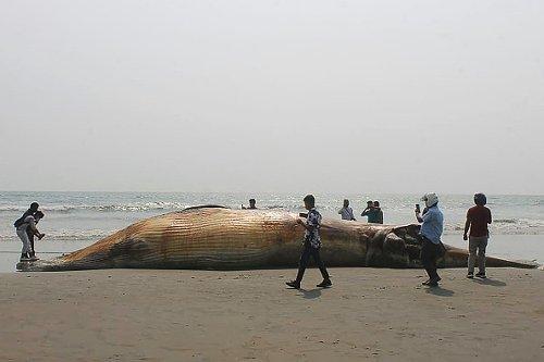 Un balena morta su una spiaggia del Bangladesh