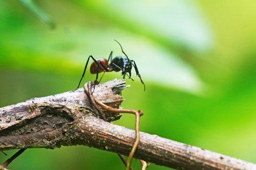 Ant close encounter