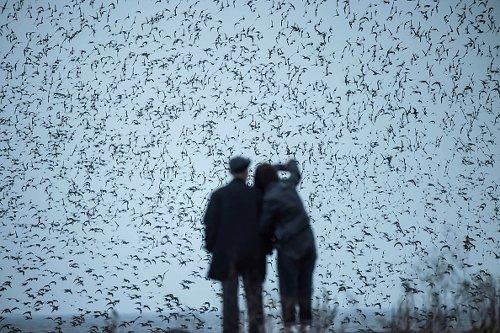 Uccelli migratori in Cina