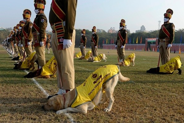 Disciplined Dogs