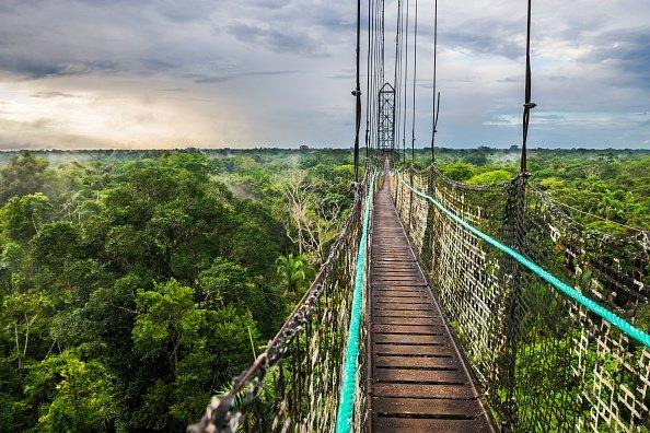 Jungle canopy walk in Ecuadorian Rainforest