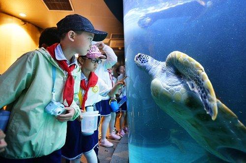 Sea turtle tutorial