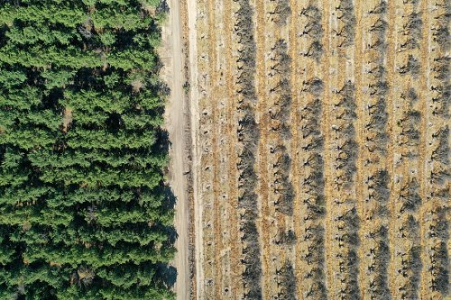 Almond trees removed