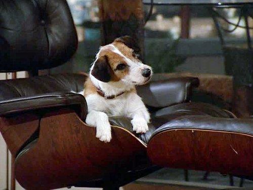 Dog on the Set