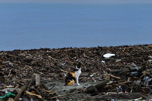 Un gatto tra i rifiuti portati a riva su una spiaggia di Banda Aceh