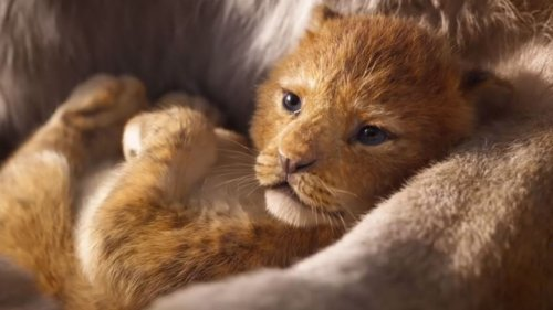 The Lion King 2 Is Happening