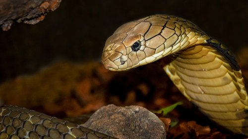 Man Sentenced To Life In Prison After Using Snake As A Murder Weapon