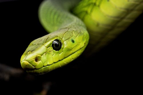 Snake Attacks Woman From Hedges, Watch The Shocking Video