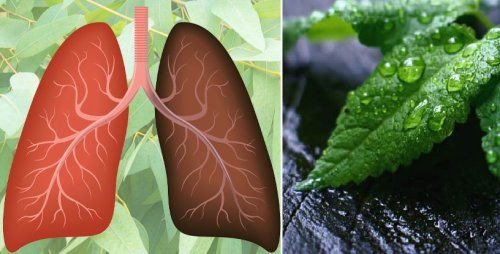 Are You Short Of Breath? Here Are The 15 Most Powerful Herbs For Your Lungs' Health