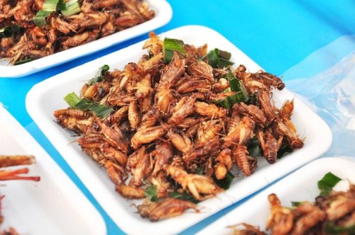 Getting Buggy: Edible Insects - Gildshire