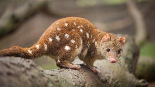 Endangered Aussie Animals Have Found a New Home in Western Sydney