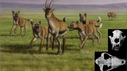 Humans Lived Alongside Fierce Dog-Like Creatures in Prehistoric Europe, Fossil Find Suggests