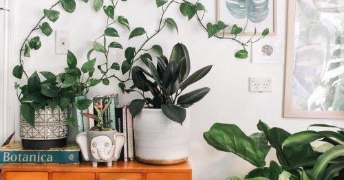He probado estos cinco trucos para que mis plantas no se sequen durante las vacaciones y ¡FUNCIONAN!