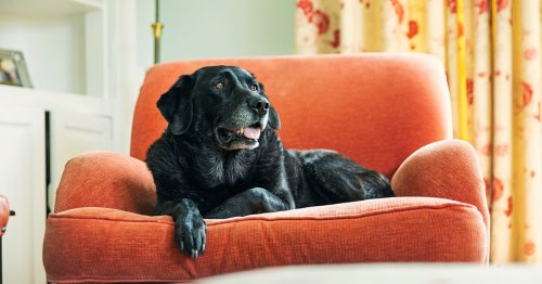 The six signs and symptoms of pet dementia owners need to look out for