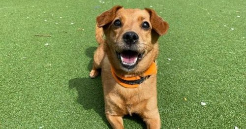 Lonely summer for 19 lovely dogs searching for a place to call home