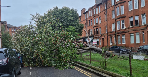Tree crashes down on Cathcart street lined with parked cars in south side