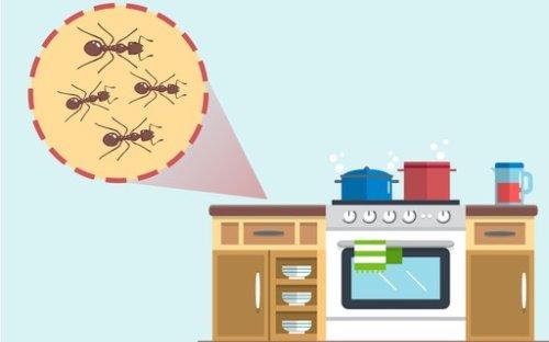 Dicas caseiras para acabar com as formigas e os mosquitos em casa