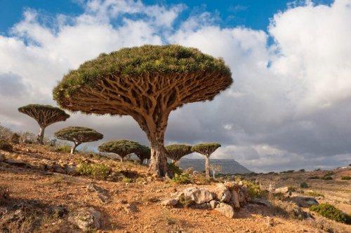 UNESCO World Heritage Sites in Yemen