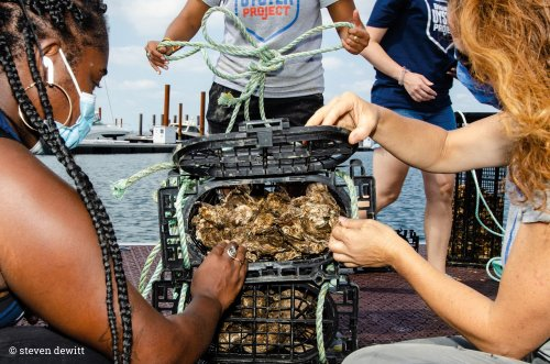 One Billion Oysters, One Shell of a Mission