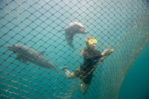 Bali hosts the first centre to return captive dolphins to the wild | GLOBAL HEROES MAGAZINE