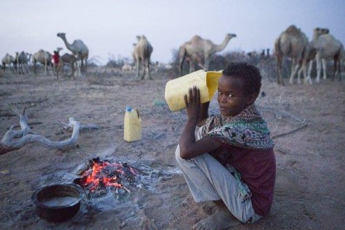 From camel to cup: Camel milk froths hopes in drought-hit Kenya | GLOBAL HEROES MAGAZINE