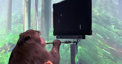 Elon Musk shows off monkey 'playing a video game' via Neuralink implant