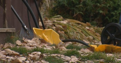 'Leave the rake in the shed and the leaves on the ground': nature conservancy group