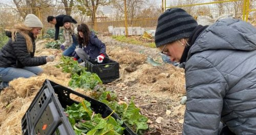 Effort to grow food for struggling Calgarians hopes for support from new city council - Calgary | Globalnews.ca