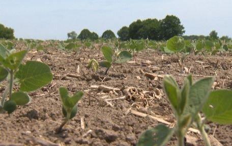 Manitoba suffering driest July on record - Winnipeg | Globalnews.ca