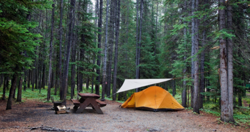 Manitoba seeking feedback on campsite reservations - Winnipeg   Globalnews.ca