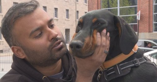 Montreal man says he was denied apartment because of therapy dog