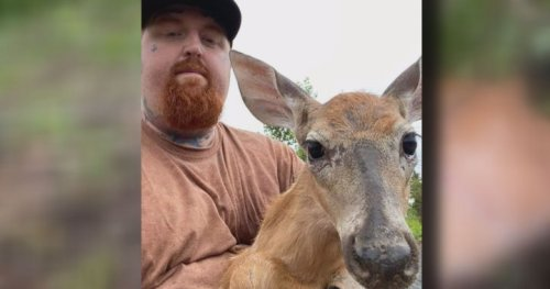 'Right place, right time': N.B. couple help save fawn stuck in fence - New Brunswick | Globalnews.ca