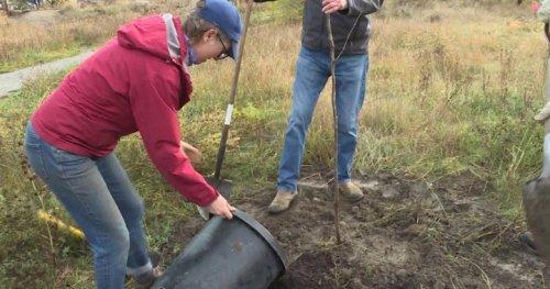 Kelowna Rotarians plant trees in Munson Pond Park - Okanagan | Globalnews.ca