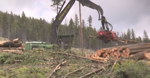 'That's a clear cut': Residents in Kelowna-area neighbourhood outraged over logging
