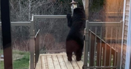 A New Brunswick family and their close encounter with a backyard bear